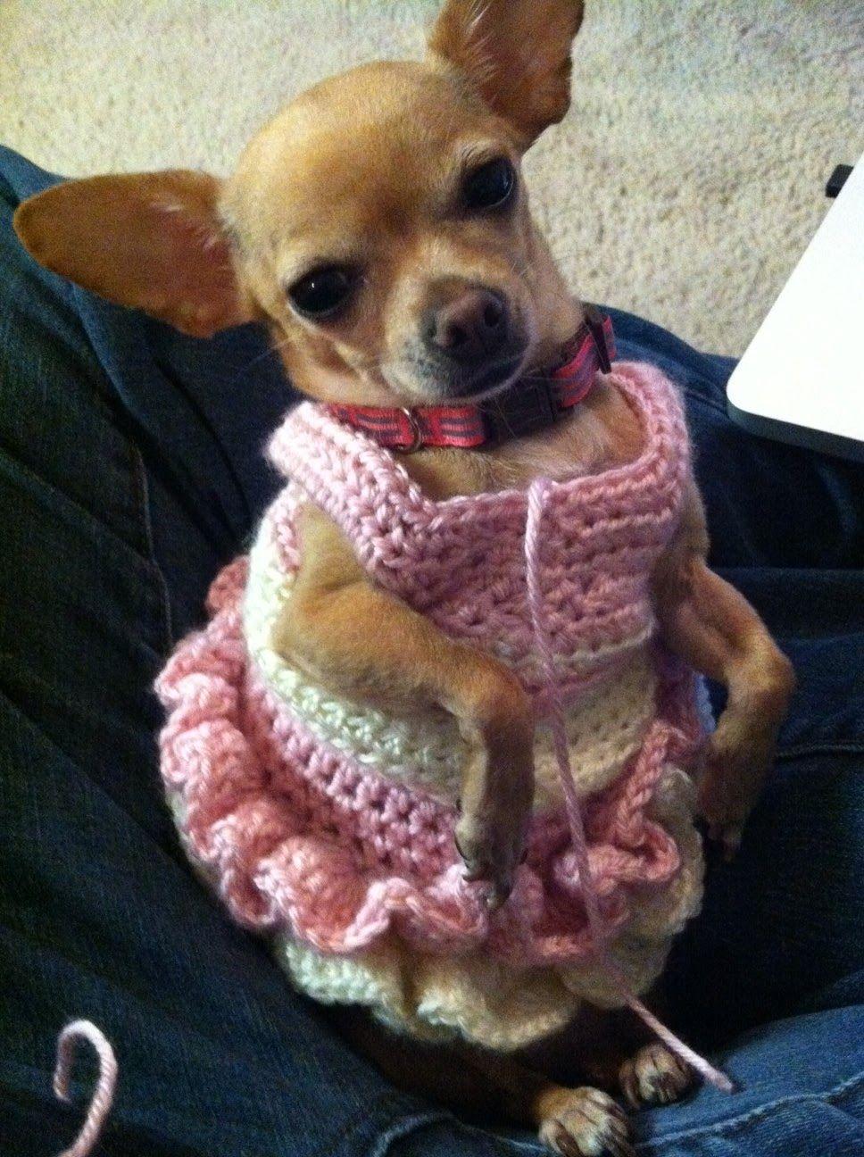 http://1.bp.blogspot.com dog dress | Puntadas | Pinterest