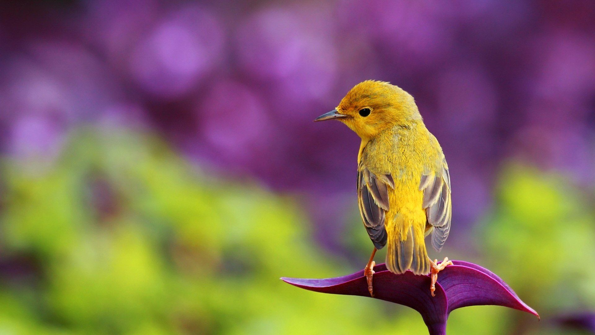 spring animal wallpaper for iphone #6ya | animals | birds, beautiful