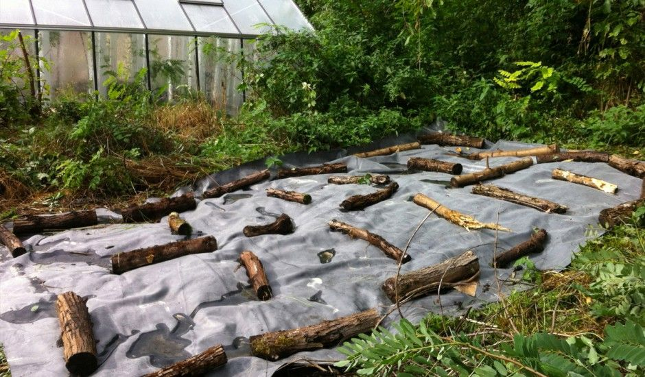 Bache Epdm Desherbage With Images Permaculture Outdoor Bed