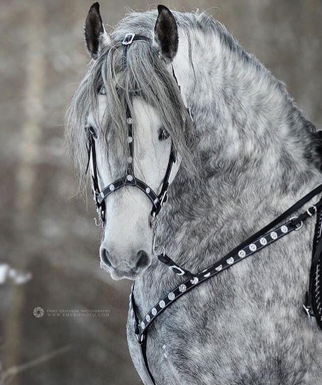 At ve Cirit Sevdalıları #cowboysandcowgirls