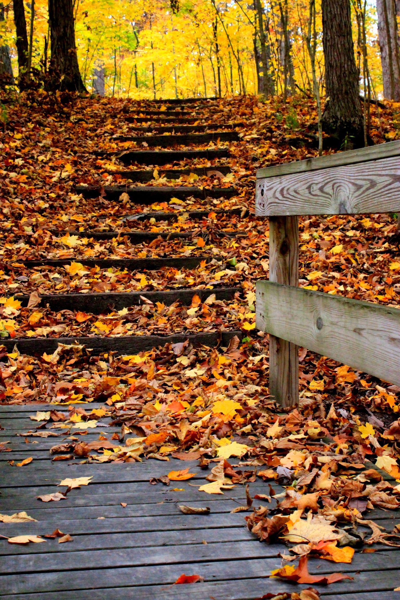 Hiking In The Beautiful Fall Scenery