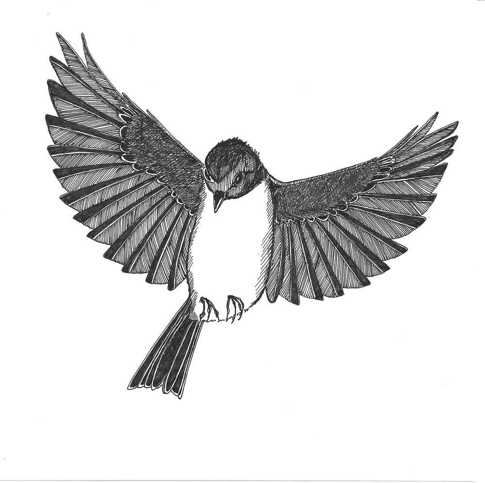 одной картинки летящей птички карандашом уже первый случай