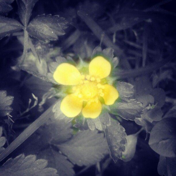 una floresita de mi jardin :)