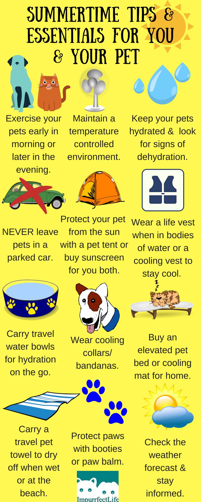 Cat health tips pet care