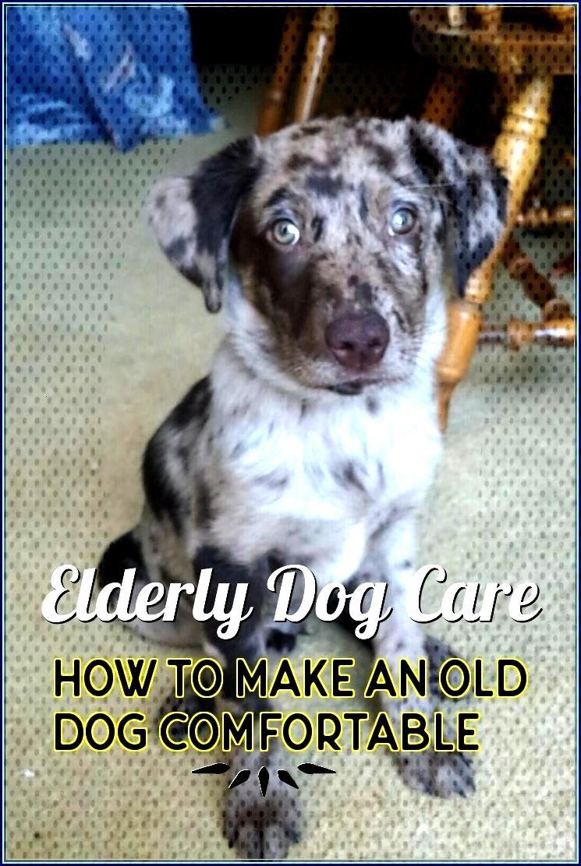Elderlydogcare Information Emergency Insurance Although