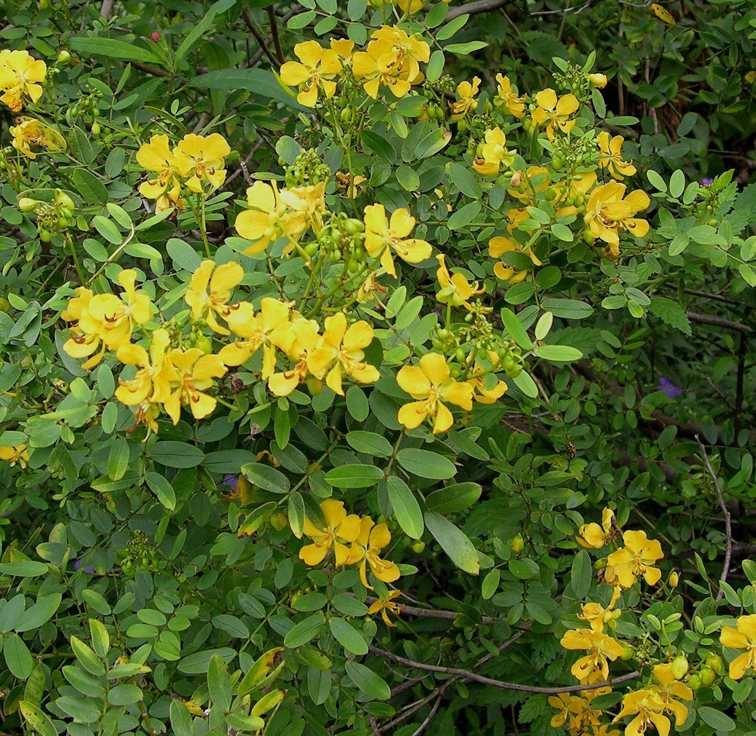 Fairchild tropical botanic garden home gardening