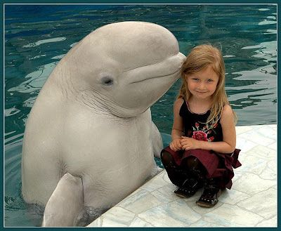 """Oh, all these animals are just humans, they just have animal bodies. Wow!! Just look at that!! See and feel the amount of emotions this pic is filled with!! It's so so very very sweet, awesome, and super super beautiful!! And that's not a dolphin, I always thought it was a type of dolphin. Seems it's a type of whale called """"Beluga whale."""" Love the name...lol.    #God #spirituality #sweet #animals #nature"""