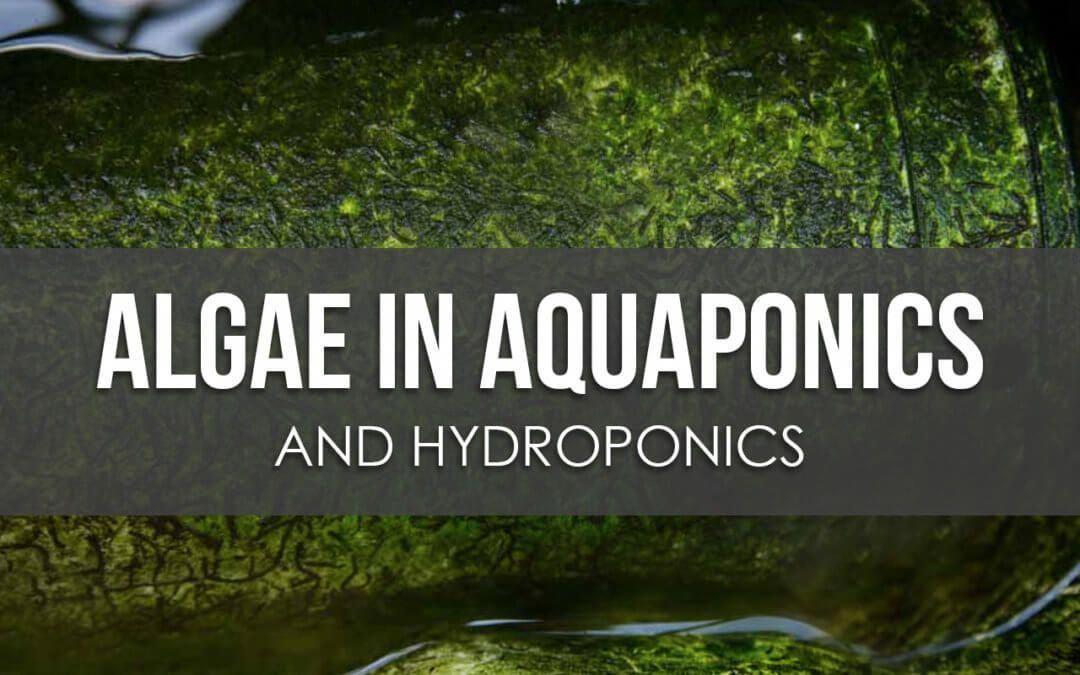 How To Manage Algae In Aquaponics And Hydroponics 400 x 300