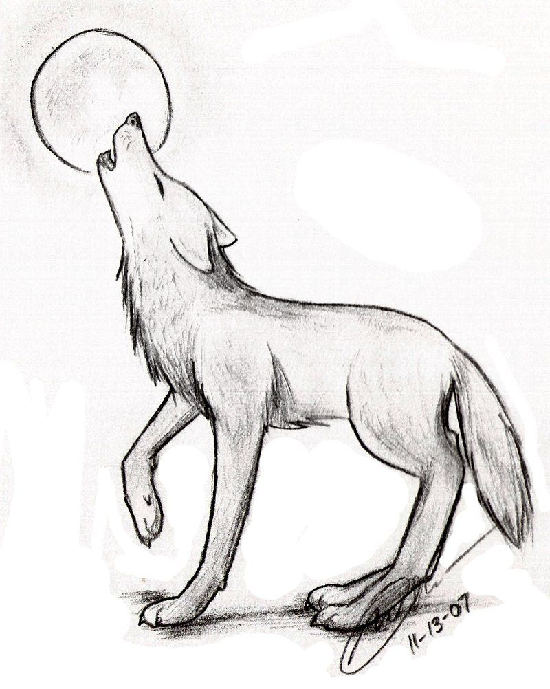Find Some Pencil Drawings Of Wolves Along With An Outline For