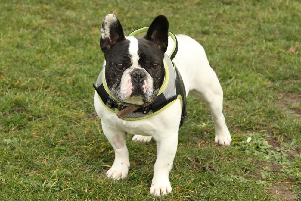Frankie Dog adoption, Dogs, Rescue dogs