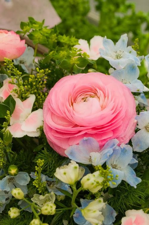 Totalmente Aire libre: Pink Roses Renoncules
