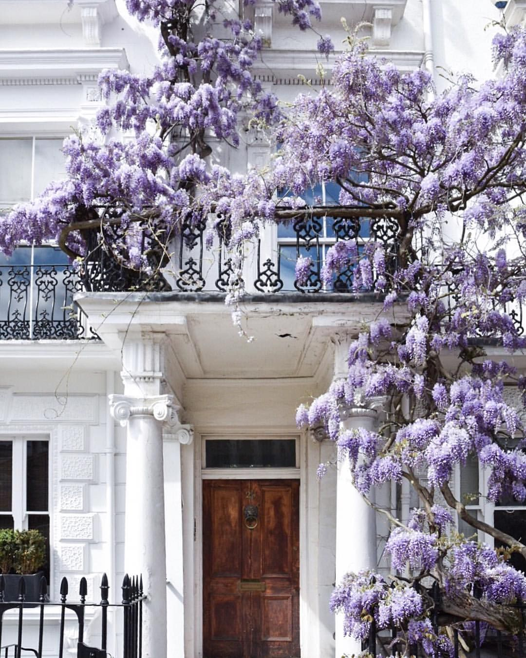 Wisteria Home In 2019: Nothing Hill, London, England Where We Used To Live And We