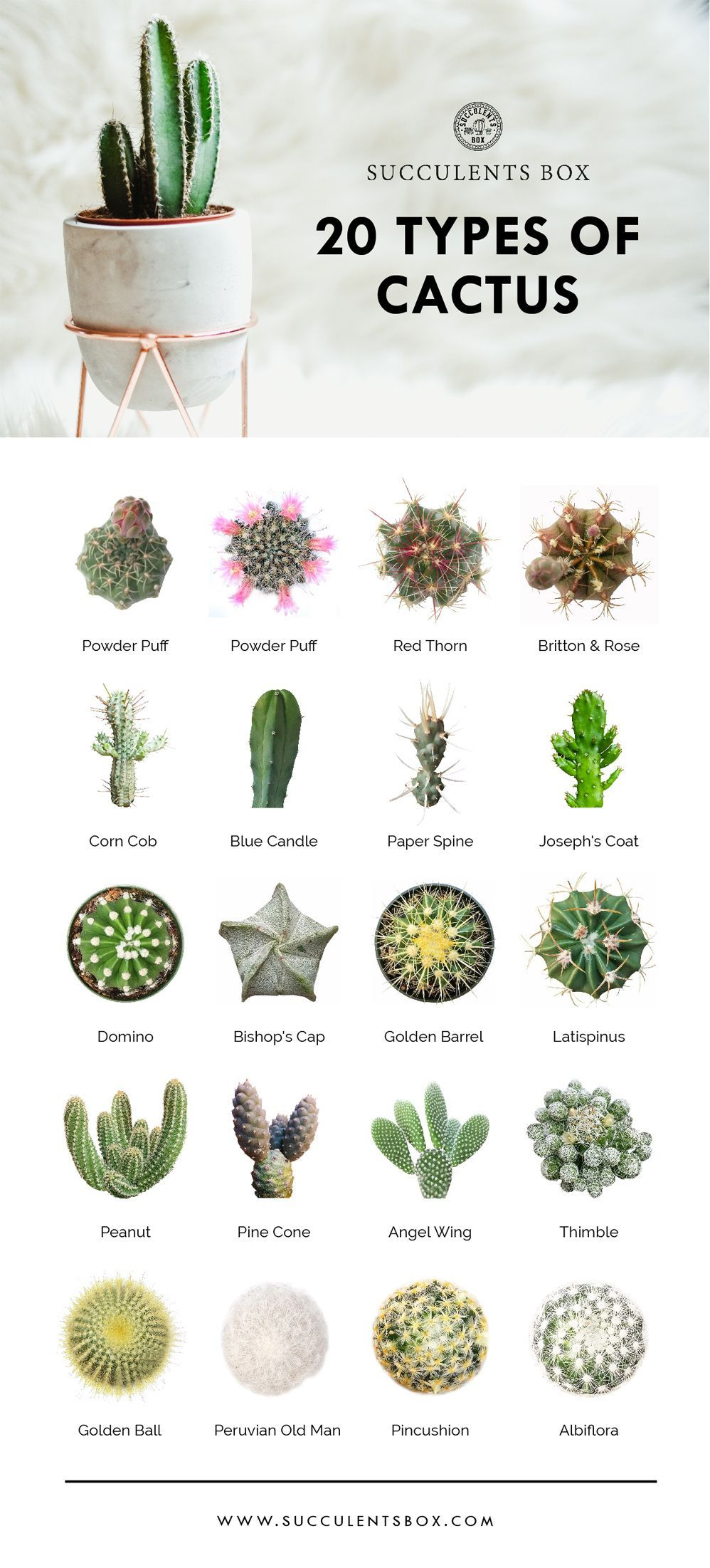 20 types of cactus // plants | home | natural designs | time-honored #cactusplant