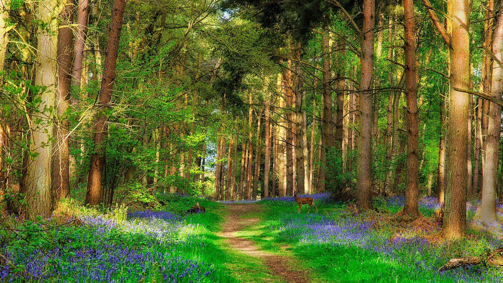 Deer And Forest Beautiful Spring Nature Wallpaper Spring Forest Nature Wallpaper Beautiful Forest