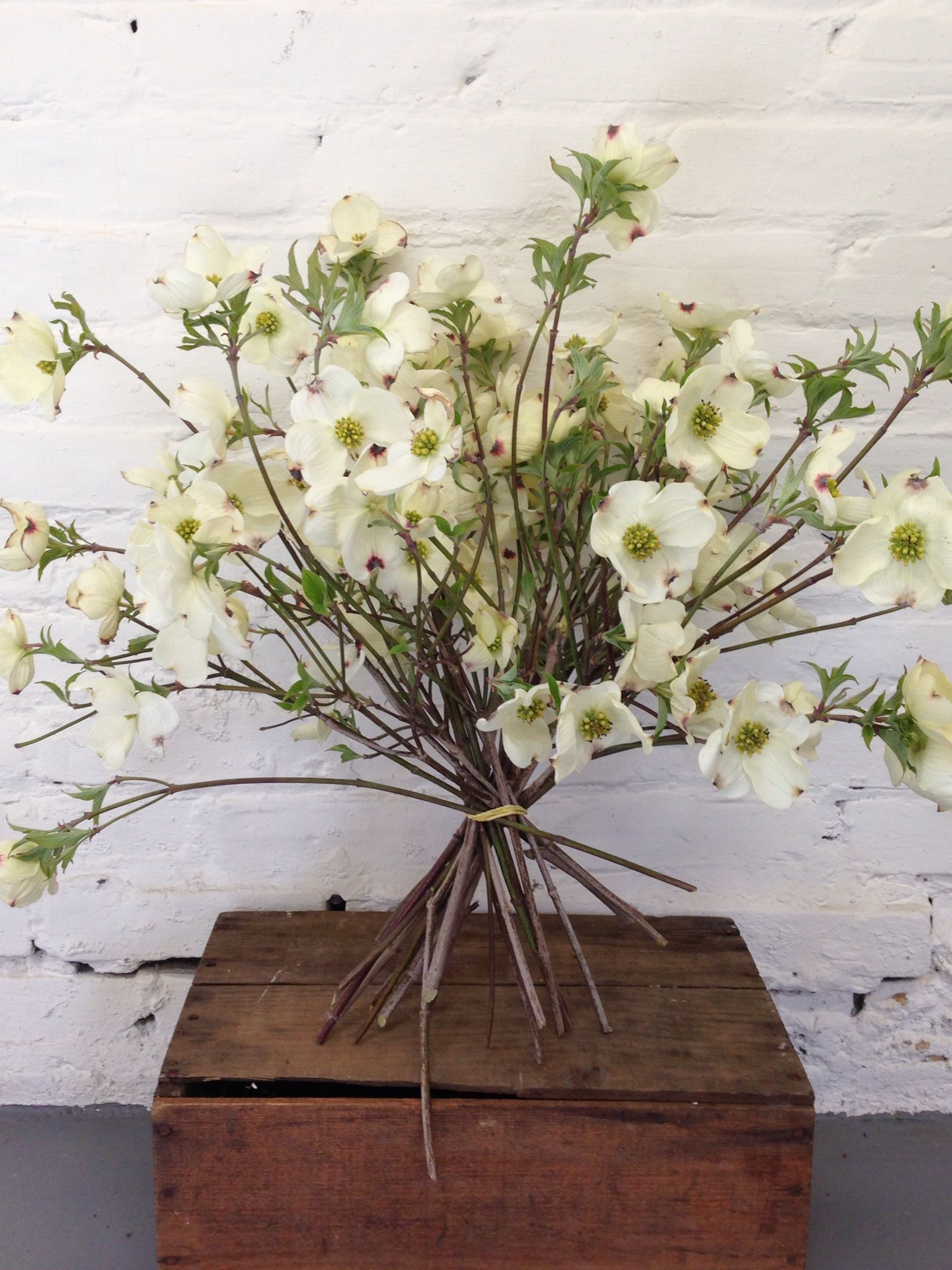 Dogwood Branches Dont You Want A Bouquet Of These Beauties May