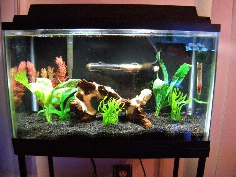 Advices fish tank decoration ideas freshwater aquariums for How to decorate fish tank