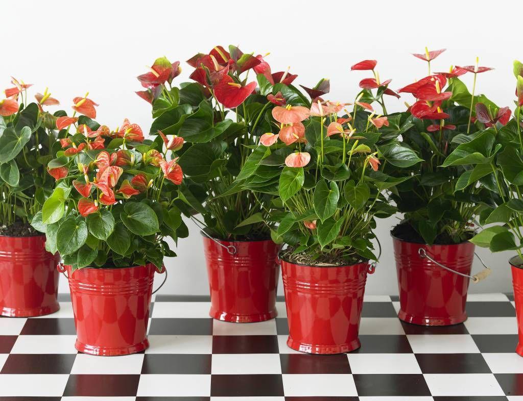 Imagenes de plantas de interior que necesitan poca luz for Plantas de interior con poca luz
