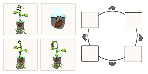 Bean Life Cycle Worksheets Education Plant Life Cycle