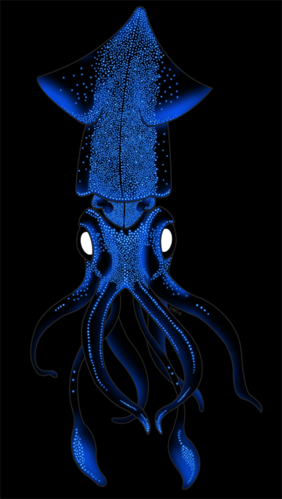 Firefly Squid Google Search Deep Sea Creatures Ocean