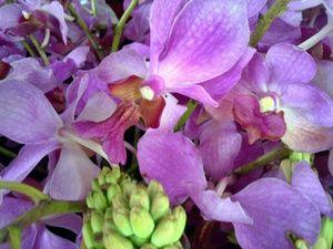 Bunga Anggrek Vanda Douglas Ungu Anggrek Bunga Ungu