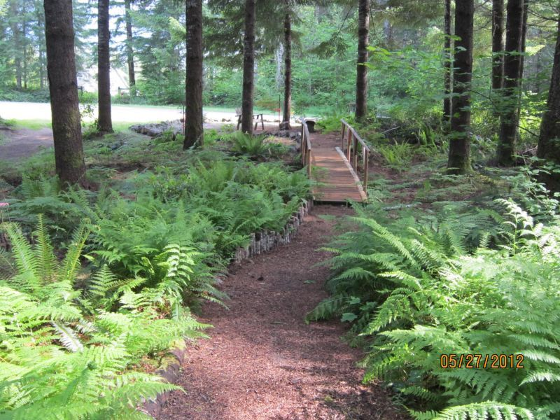 Forest Landscaping Ideas Google Search Wooded Backyard Landscape Landscape Stairs Lake Landscaping