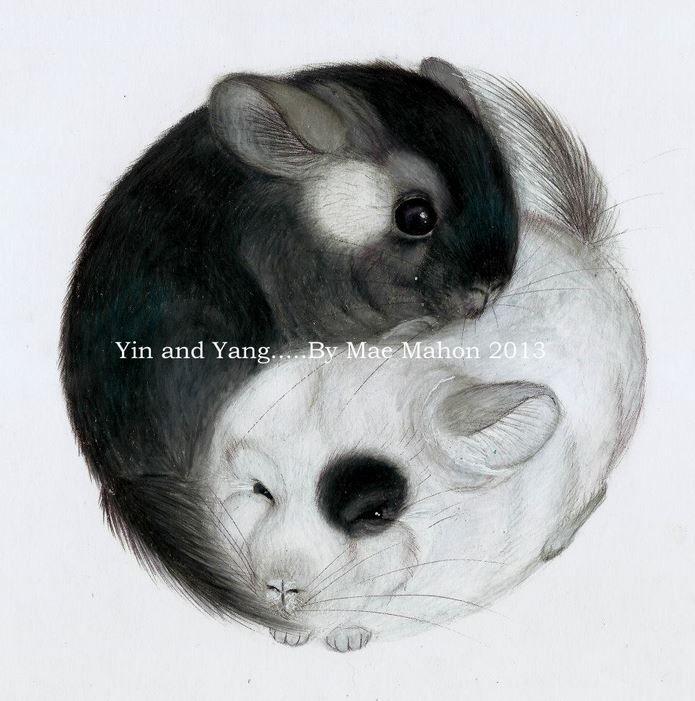 yin yang chinchillas by mae mahon 2013 coloured pencil drawing