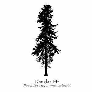 Douglas Fir Silhouette | Tattoo | Douglas fir tree, Tree ...
