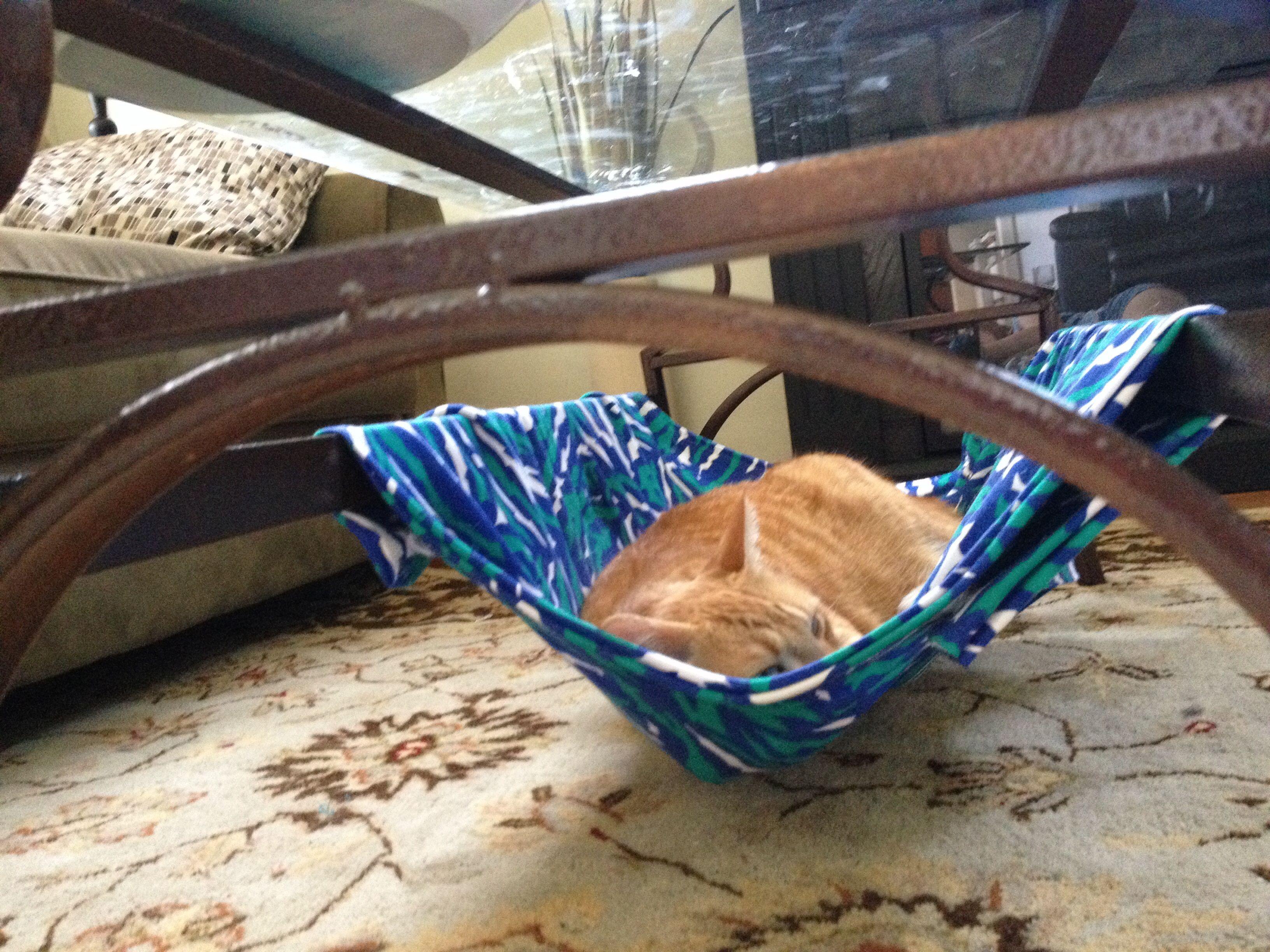 Cat hammock under my coffee table
