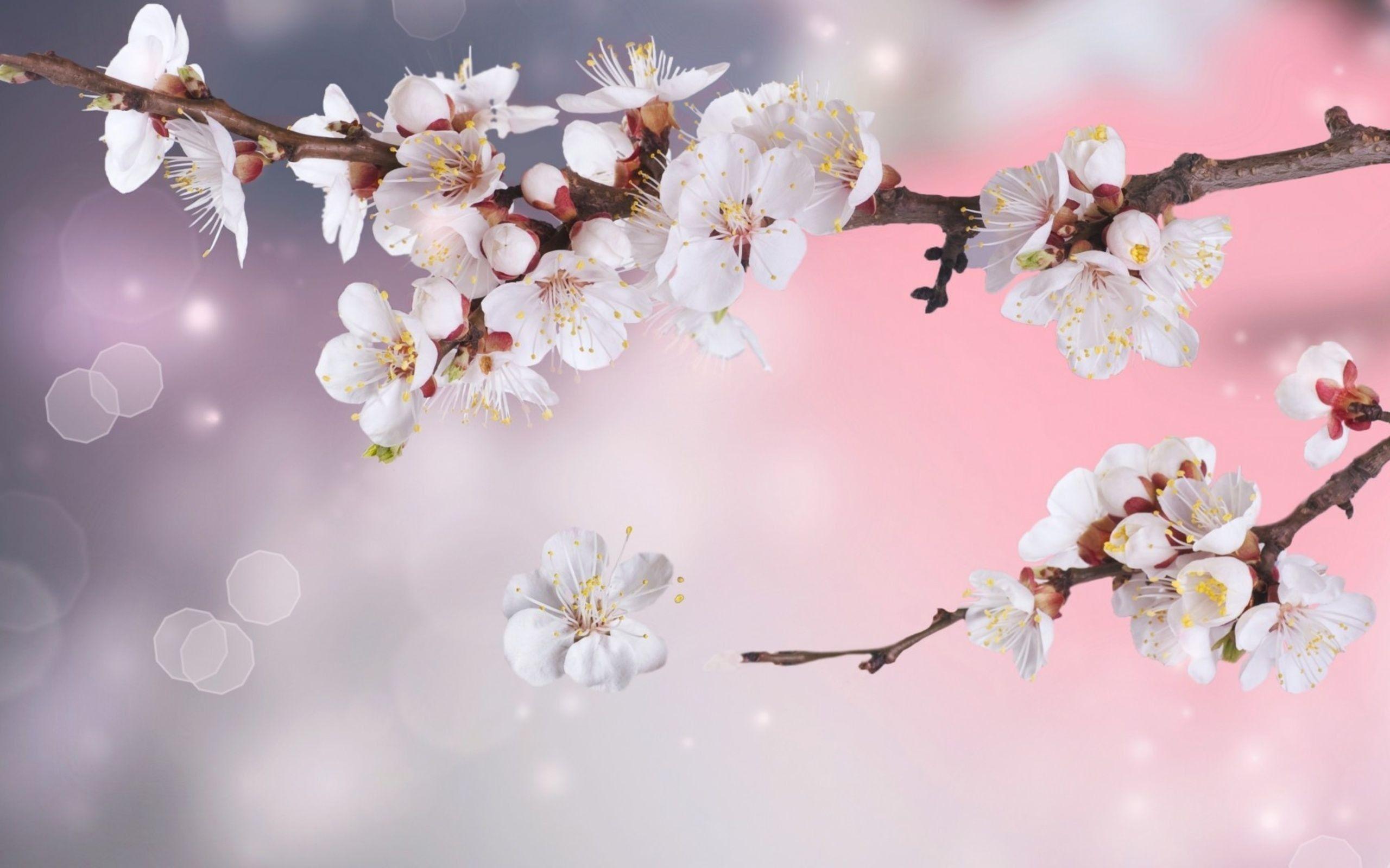 Best Of White Flowers Wallpapers For Desktop Bunga Seni