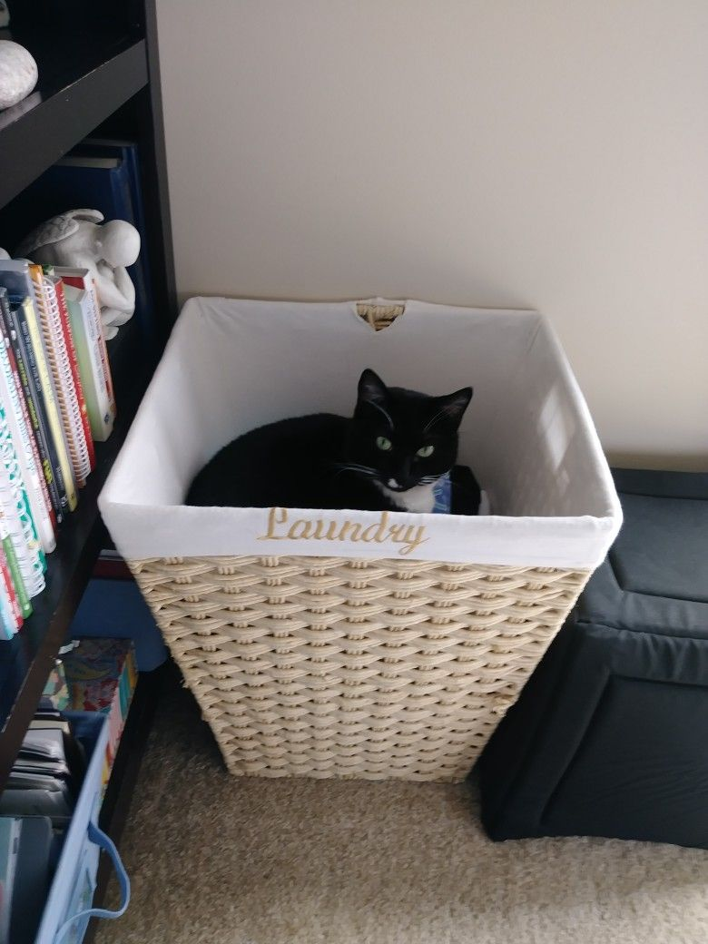Tths Best Cat Condos And Beds And He Chooses The Laundry Basket