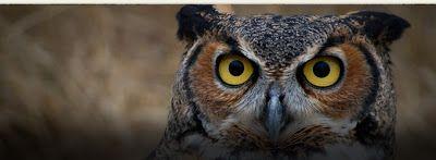طائر البوم صورة جديدة وعالية الدقة Owl Bird ما هي أنواع البوم أو أنواع طائر البوم هذه أنواع عديدة تظهر في الصور التالية في أماكن مختل Owl Bird Owl Bird