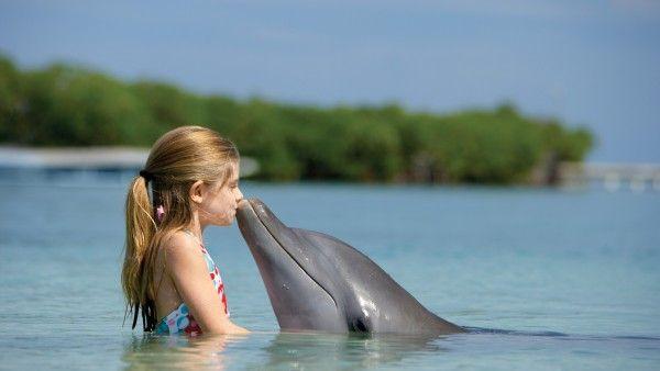 Картинки девочки и дельфина в море (с изображениями ...