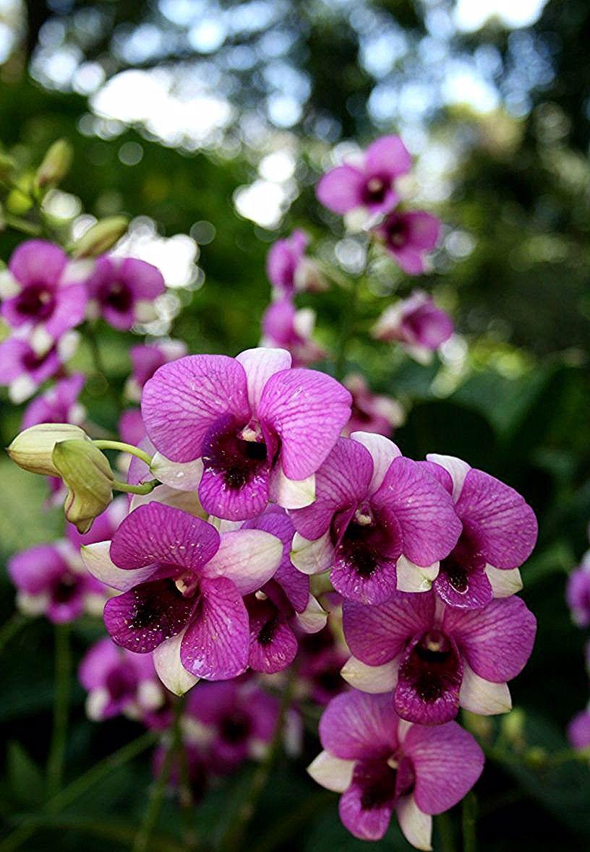 Comment Soigner Une Orchidee Esprit Laita In 2020 Flower