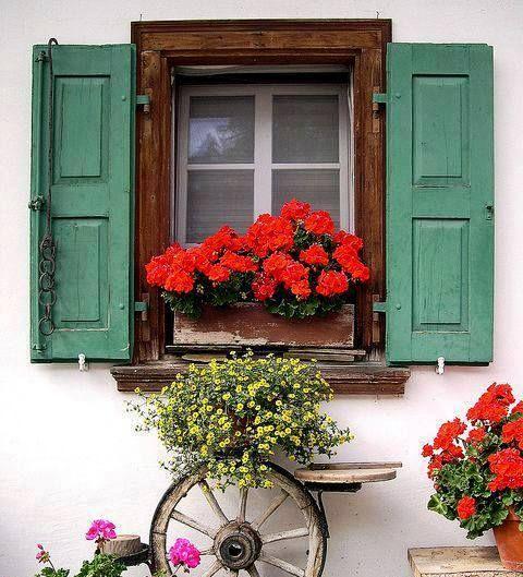 Pin de Karimen T en Fleurs Flowers Pinterest Ruedas