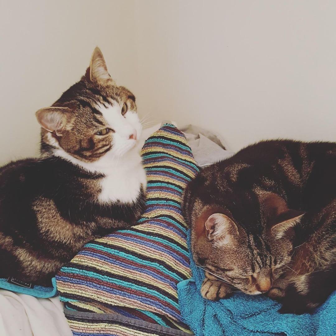 Love Cute Cats Funny animals, Animals, Cat love