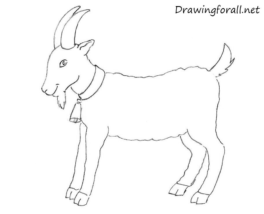 How To Draw A Goat For Beginners Goat Drawings Goat Paintings