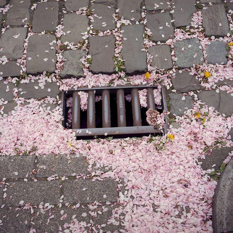 Pinterest lazycupcake13 ♡ Pink aesthetic, Flowers