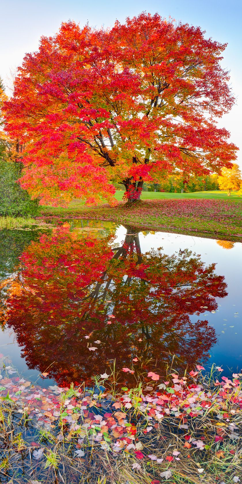Beautiful landscape tree and reflections. Add trees with colorful foliage or striking flowers near water. #falltrees