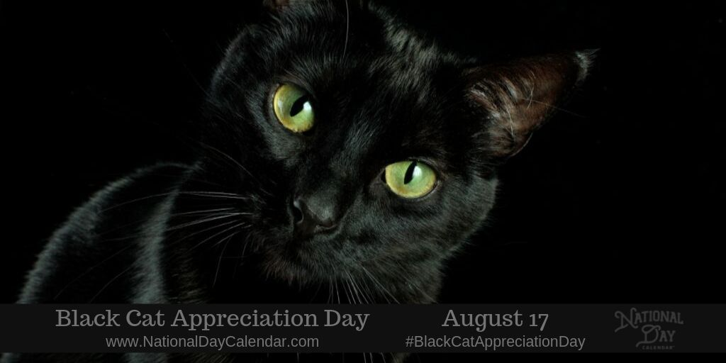 Black Cat Appreciation Day National Day Calendar Black Cat Appreciation Day National Black Cat Day Black Cat Day