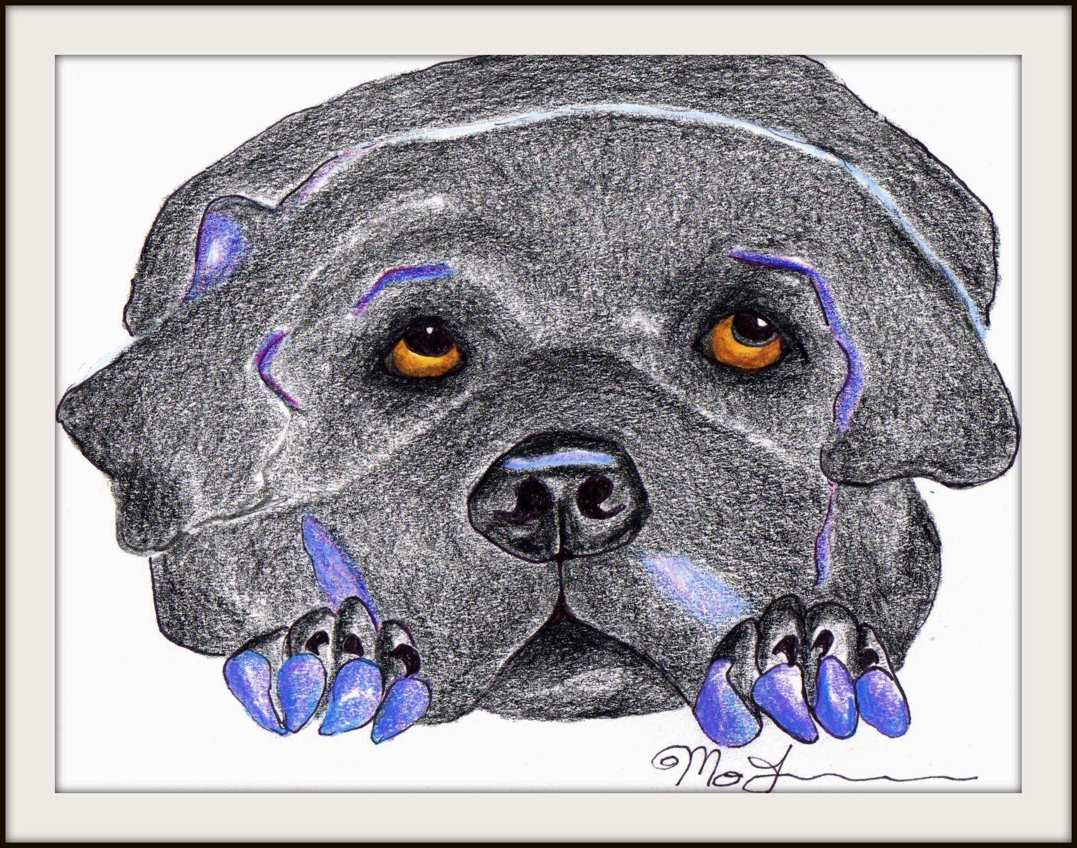 Black Dawg.....by Moey