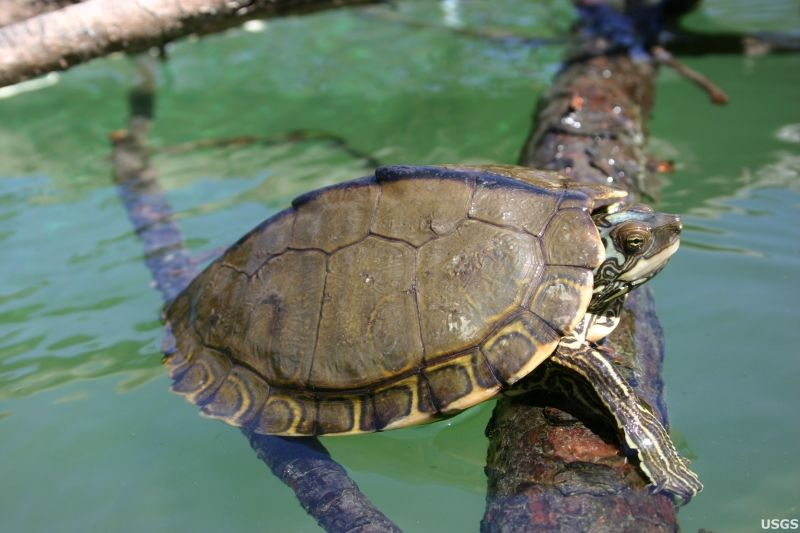 The Inspiration For Pearl The Turtle Needs Your Help Read More