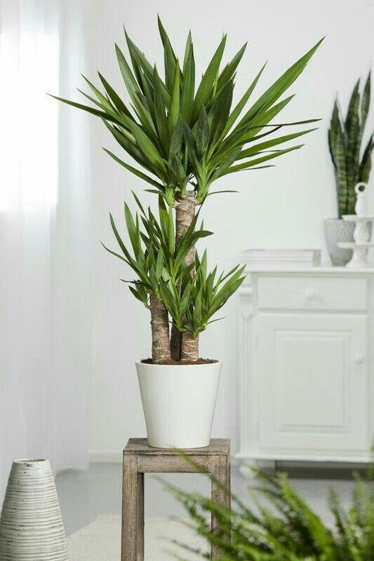 Pin de Asta Matuliene en Living rooms | Pinterest | Plantas, Plantas ...