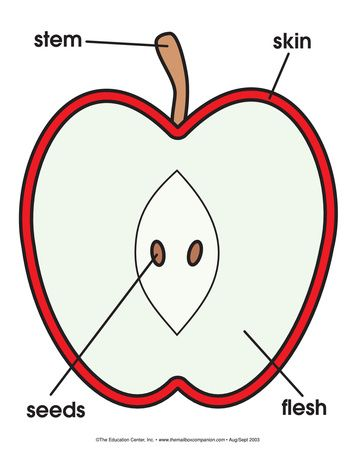 Apple       Diagram     Lesson Plans  The Mailbox      Apple    activities     Apple    theme  Preschool worksheets
