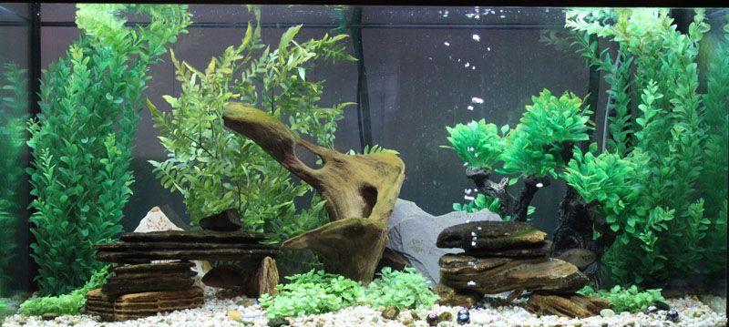 Freshwater Aquarium Design Google Search Aquarium Design Fish Tank Aquarium