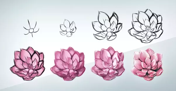 How to draw a realistic flower (step,by  in 2019