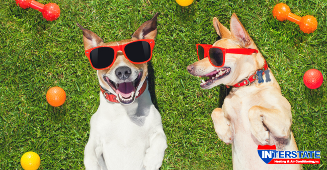 How to Keep Your Pets Cool in the Summer Do dogs laugh