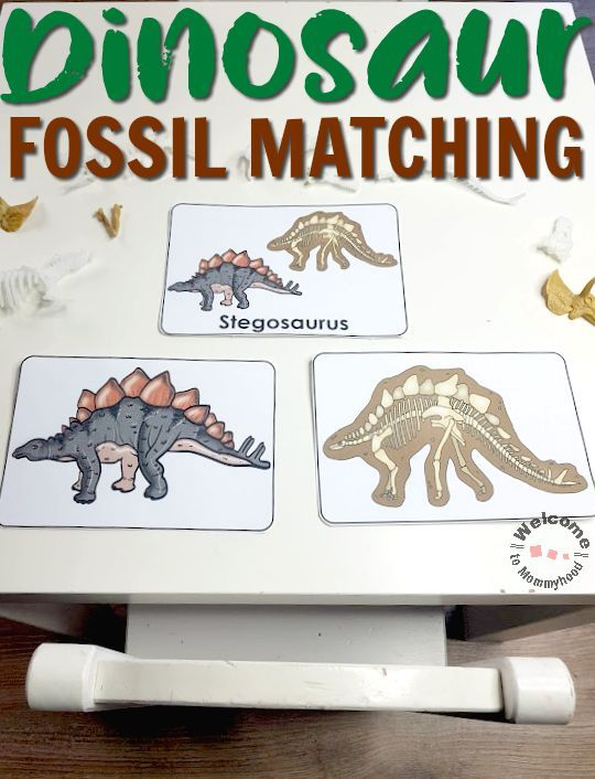 Fossil Printable Activity