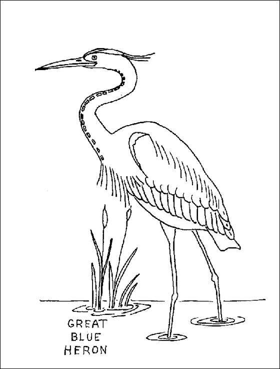 Coloring Page Great Blue Heron Coloring Pages Heron Art Bird Coloring Pages Bird Drawings