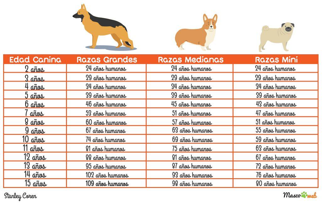 Tabla Para Averiguar La Edad Humana De Tu Perro Edad Años Perro Tabla Blog Perros Mascotas Edad Perruna Edad Perros Perruno