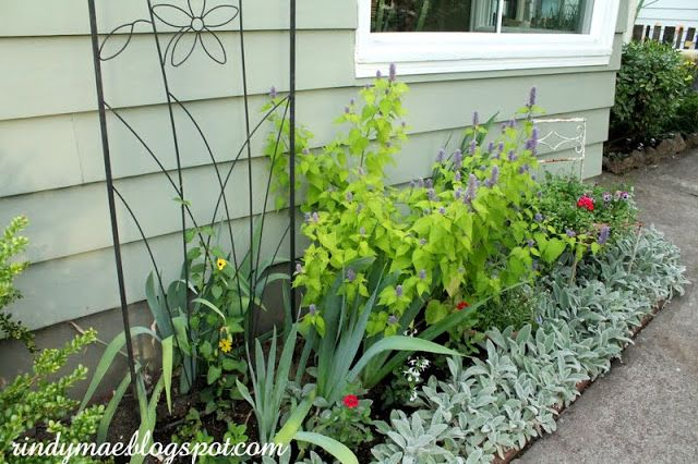 The Front Yard:  6/23/15